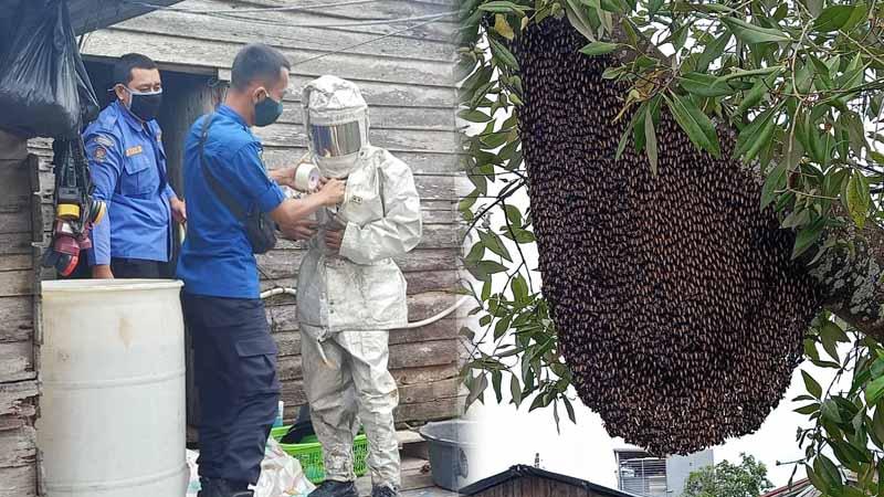 FOTO : Petugas Rescue Dinas Pemadam dan Penyelamatan Kabupaten Tanjab Barat Gunakan Pakaian Pelindung Saat Akan Lakukan Evakuasi Lebah, Jumat (19/02/21).