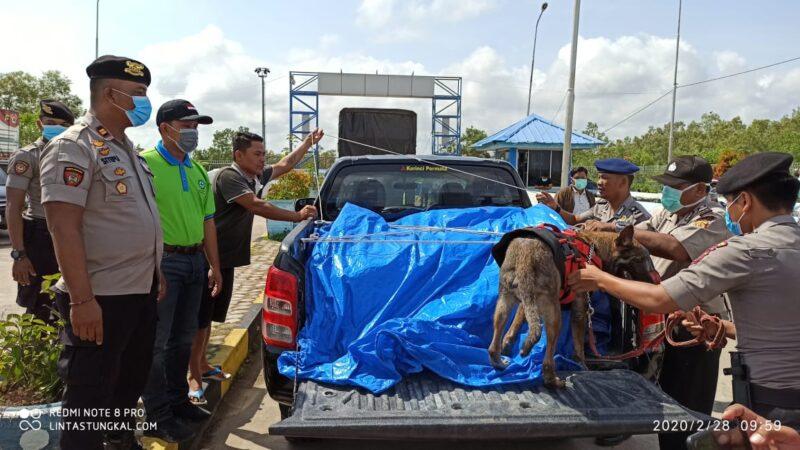 FOTO : Kapolres Bersama Anggota Saat Melakukan Pemeriksasn Barabg Salah Satu Mobil Melibatkaj Anjing Pelacak di Pelabuhan Roro, Jumat (28/02/20).