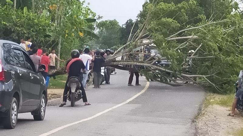 FOTO : Pohon yang Tumbang Melintang di Ruas Jalan Desa Pembengis, Senin (07/09/20)