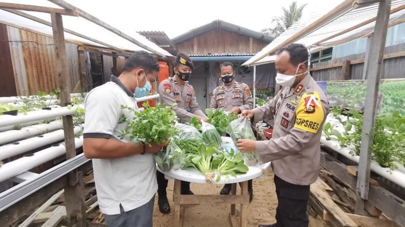 FOTO : Kapolres Tanjab Barat AKBP Guntur Saputro, SIK, MH dan Pak Iriyani Panen Sayur Sawi Hijau, Jumat (09/10/20)