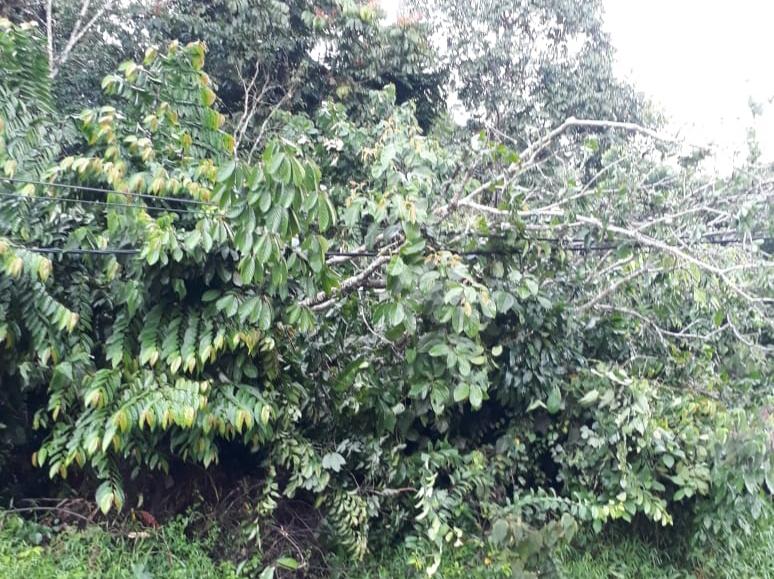 FOTO : Terlihat Kabal PLN di Timpa Ranting Pohon Tumbang