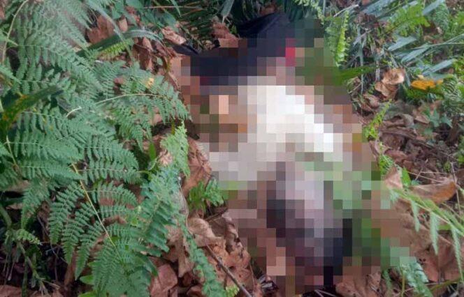 FOTO : Mayat Alm. Mahyudin (53) warga RT. 10 Dusun Harapan Jaya Desa Mandala Jaya Kecamatan Betara Ketika Ditemukan Warga, Selasa (02/03/21).