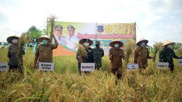 Bupati H. Anwar Sadat Saat Panen Padi sawah Gabungan Kelompok Tani Tani BERKAH di RT 10. Dusun Harapan Desa Pembengis, Kecamatan Bram Itam, Senin (24/05/21). FOTO : Prokopim.