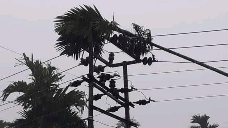 FOTO : Batang Pohon Pinang yang Menimpa Kabal PLN
